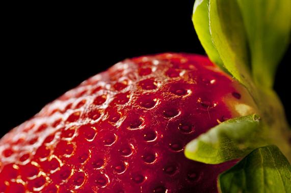 Las raíces, tallos y hojas de las fresas silvestres tienen propiedades nutritivas