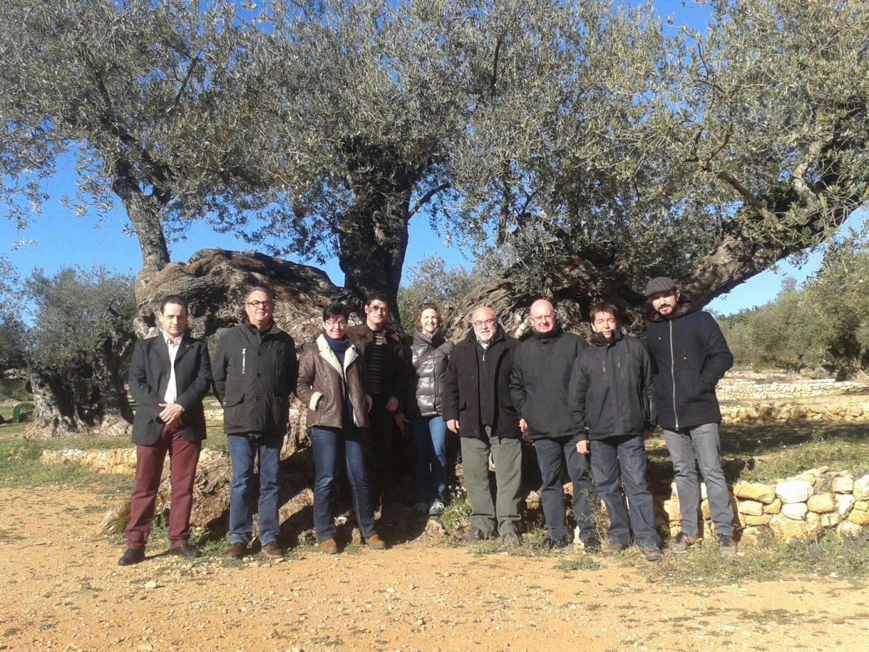 Cebrián señala los olivos milenarios como ejemplo de oportunidad para el desarrollo rural
