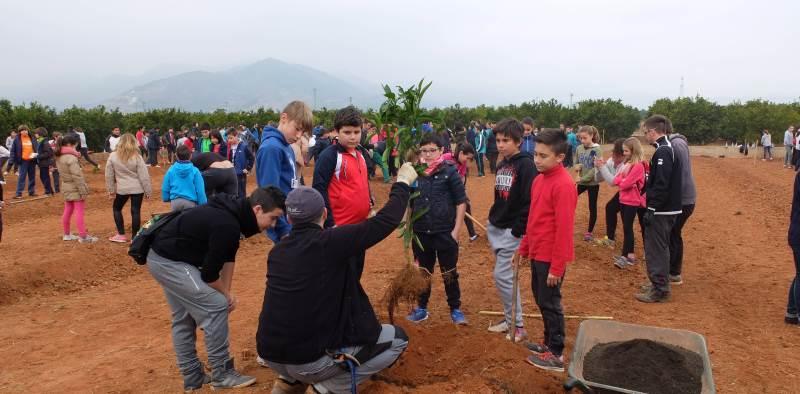 Nules inaugura la Festa Clemenules con 'Desayunos Saludables' y el Día del Árbol