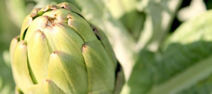 La Comunidad Valenciana incluye la alcachofa como reclamo turístico en Fitur