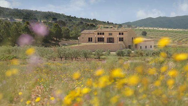La guerra del vino: Utiel-Requena y Alicante pleitean contra Valencia