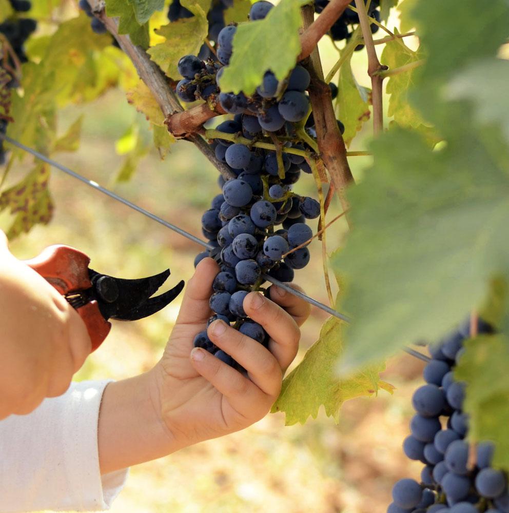 ¡Conoce la magia del vino Pasiego de Autor de Bodegas Pasiego!