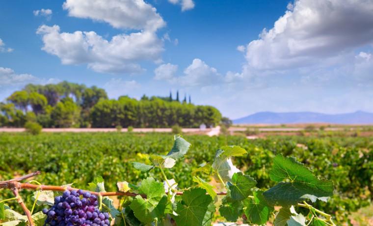 Estenas crianza un vino tinto muy intenso gastronom a - Bodegas de vino en valencia ...