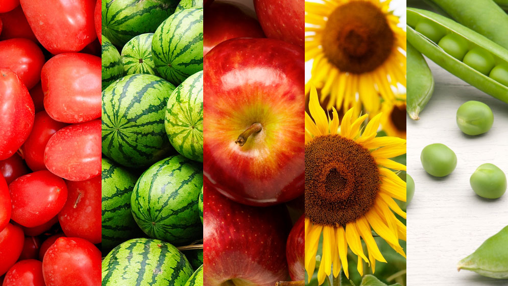 En la variedad de polinizadores está el rendimiento de cultivos