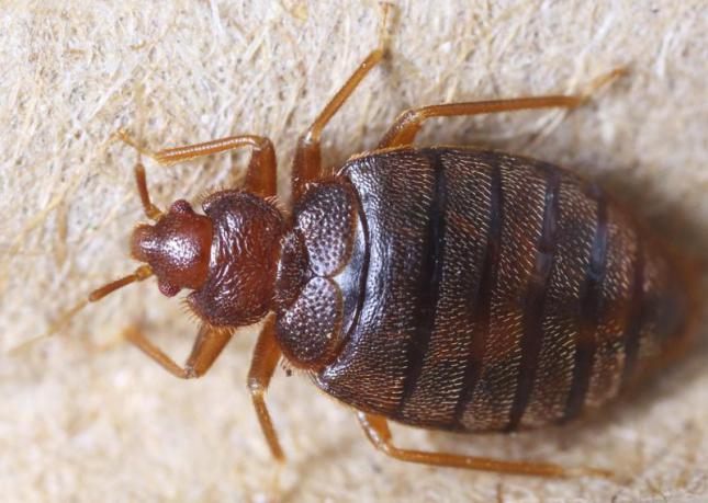 10-cosas-que-no-sabias-sobre-la-vida-de-algunos-insectos-y-artropodos-muy-curiosos-4