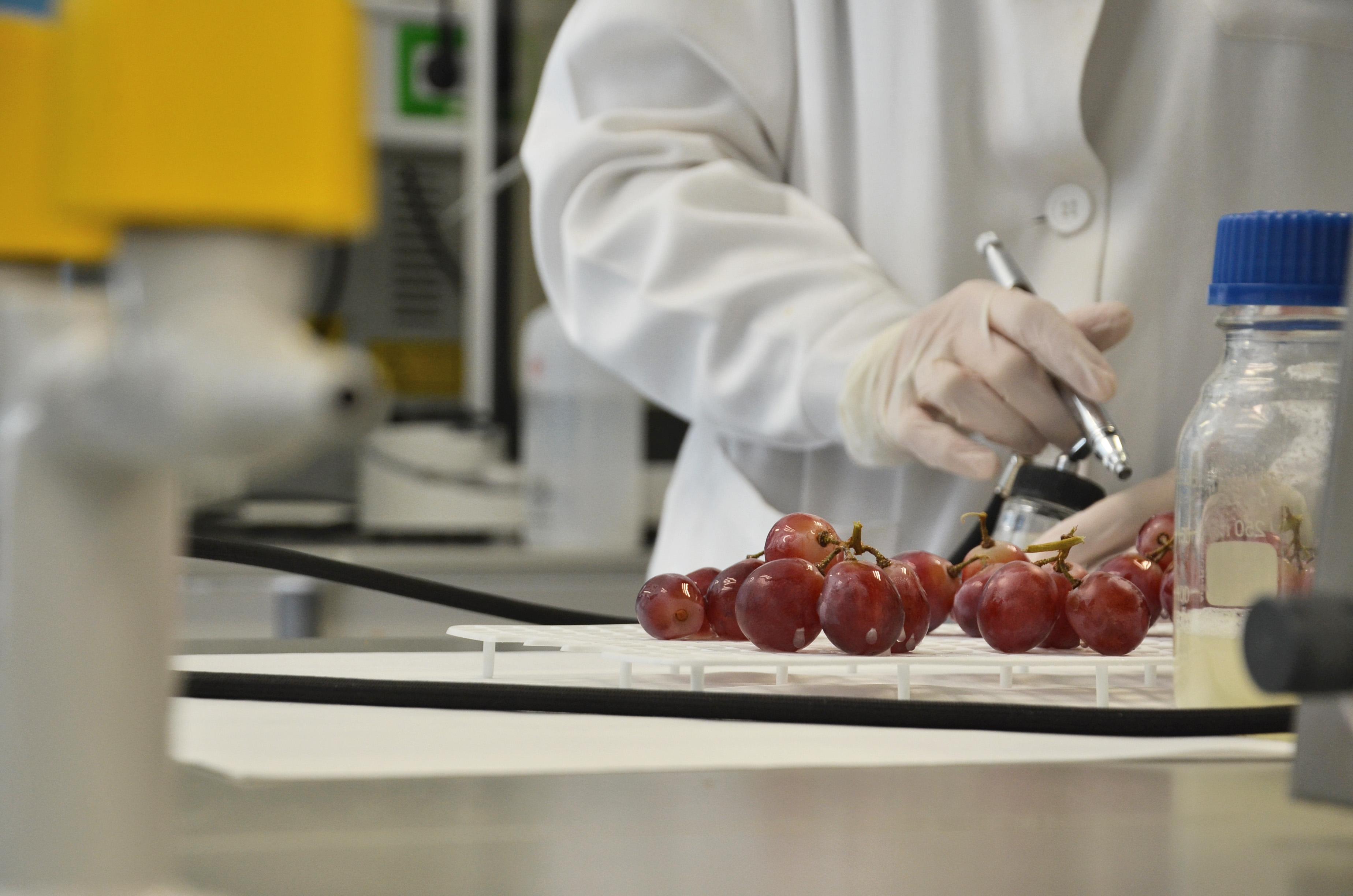 Mejora del control biológico de la podredumbre de la uva como alternativa a los fungicidas químicos