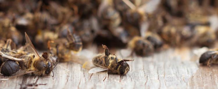 Agricultura impulsará un plan de control para atajar el uso de productos que pueden dañar a las abejas
