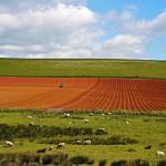 El precio de reducir las emisiones de gases de efecto invernadero en la agricultura