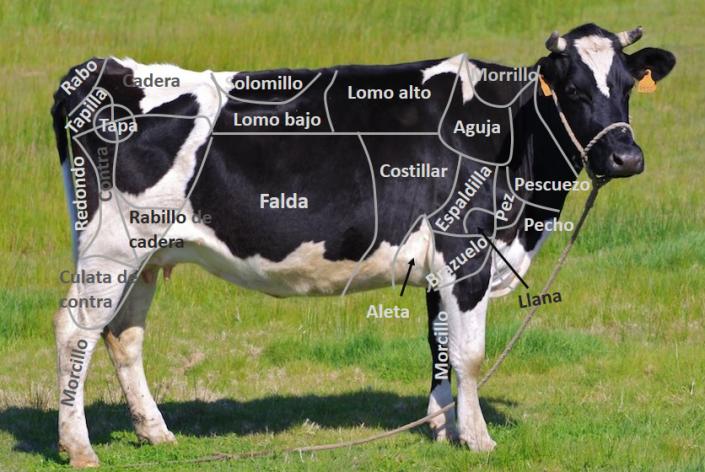 despiece-de-bovino