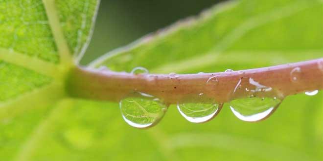 Las últimas lluvias supondrán un alivio temporal para los cultivos agrícolas