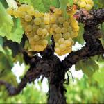 """La Unió pide al gobierno una respuesta """"adecuada"""" al """"ataque"""" de los viticultores franceses"""