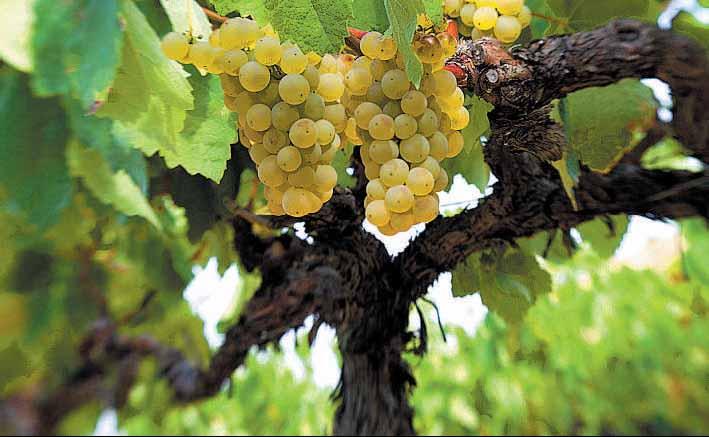 Parker abre las puertas del mercado americano a las uvas más valencianas