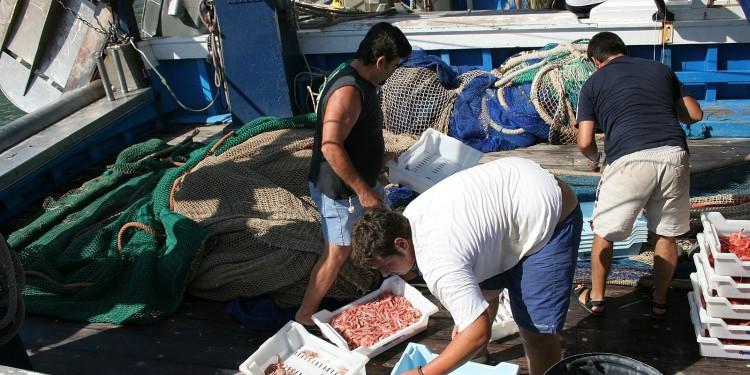 El Consell impulsa una marca colectiva que identifique los productos pesqueros de las costas de la Comunitat