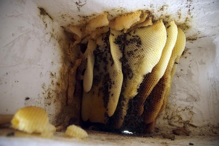 Panal-de-abejas-texto-768x512