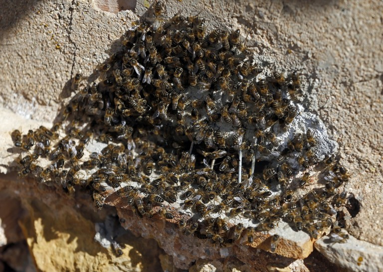 enjambre-abejas-horno-768x546