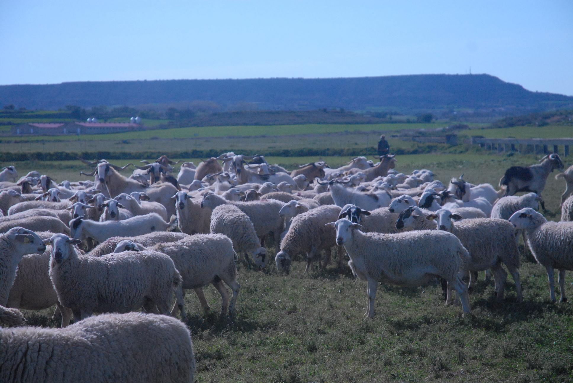 Comienza la ruta del proyecto MEDELCA junto a un pastor trashumante hasta el Pirineo