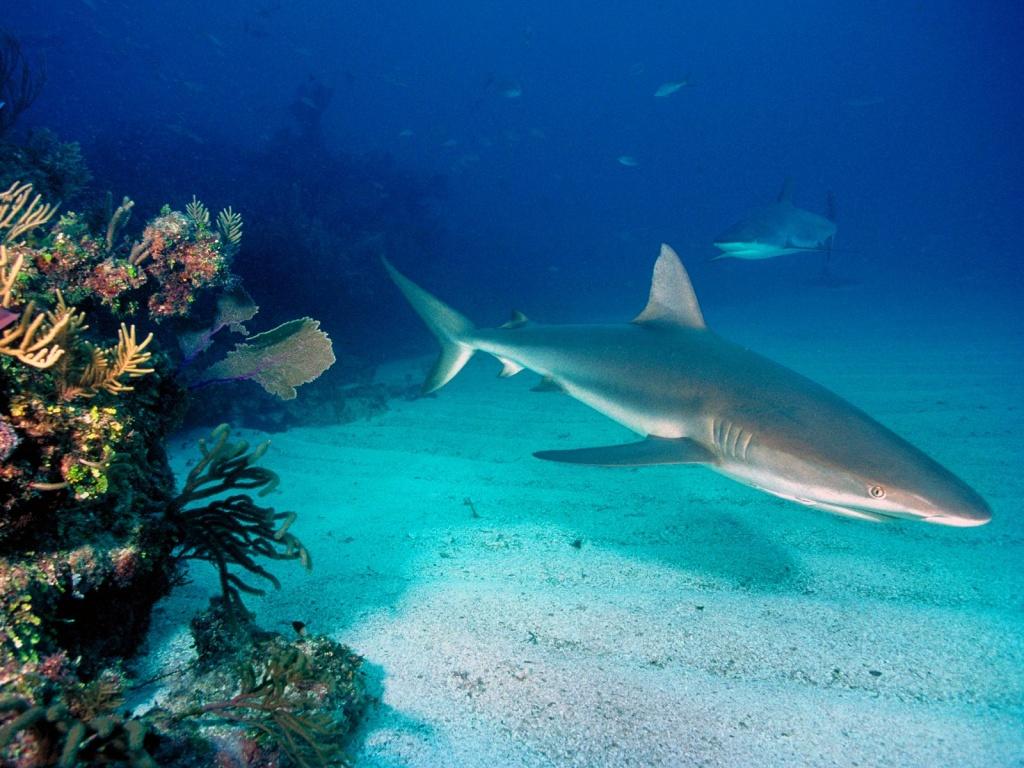 Detectan altas cantidades de mercurio en tiburones