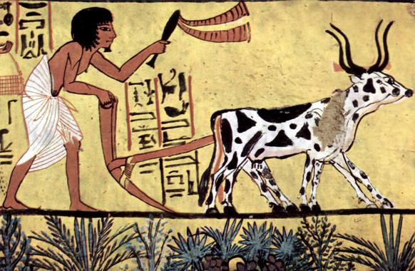 Arado con una yunta de ganado enel antiguo Egipto.Pintura de la cámara de entierro deSennedjem, de1200 a.C./ Wikipedia