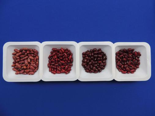 Judías y fríjoles más resistentes a la sequía con la mejora genética