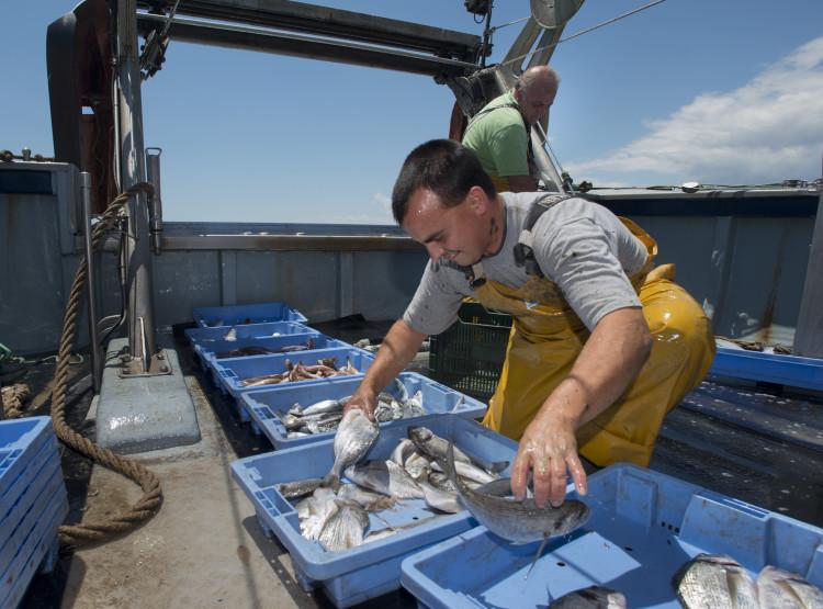 Menos del 2% de las muestras de pescado analizadas por Sanitat resultan no aptas por anisakis