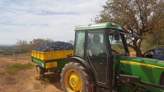 Vins de Castelló estudia ampliar su IGP para reforzar a los viticultores