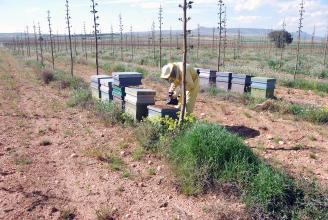 Hallan en Valencia una miel inédita en Europa y milenaria en China