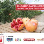 Blogueros gastronómicos participan en un encuentro monográfico sobre la granada mollar de Elche
