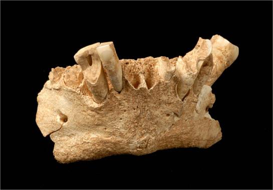 Los primeros humanos europeos no usaban fuego para consumir alimentos