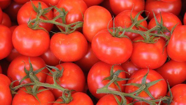 Por qué los tomates ya no tienen gusto a nada