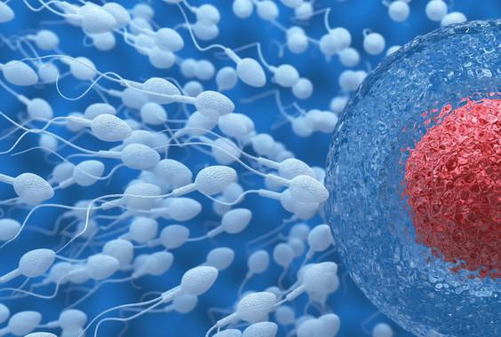 Una dieta saludable mejora la calidad del esperma y la probabilidad de embarazo