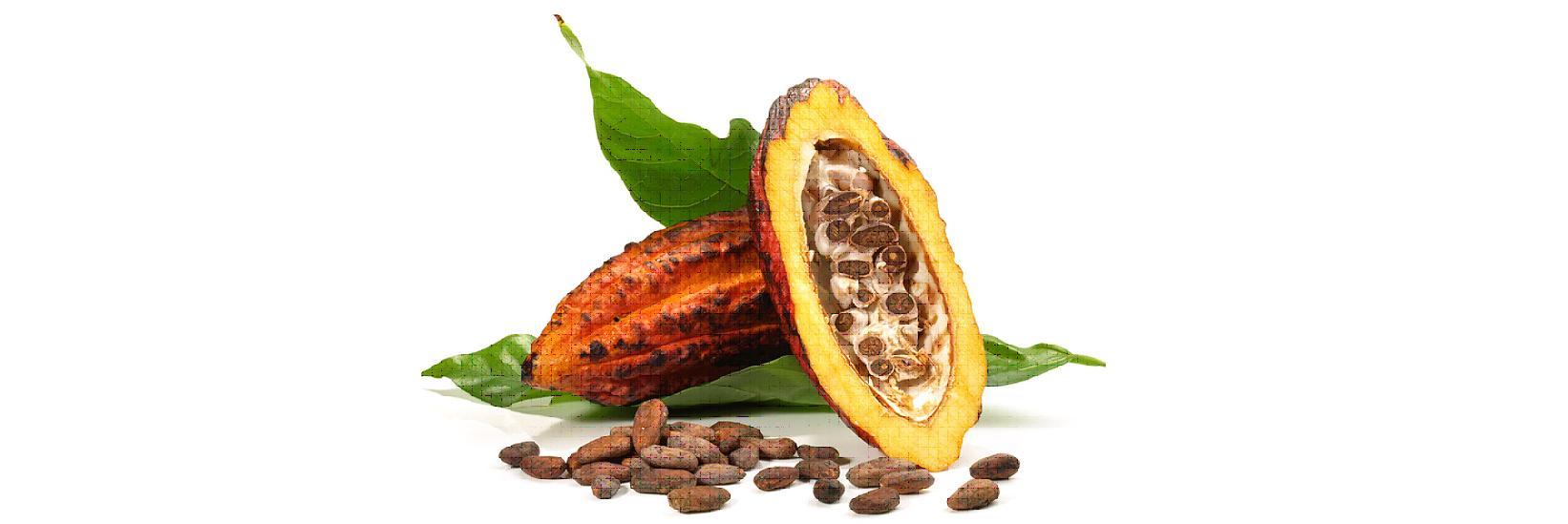 El cacao, un fruto tropical aliado para tu salud y para controlar tu peso