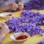 Azafrán adulterado con extractos de gardenia