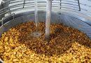 La consideración como superalimento afianza la chufa como el cultivo más viable de la huerta valenciana