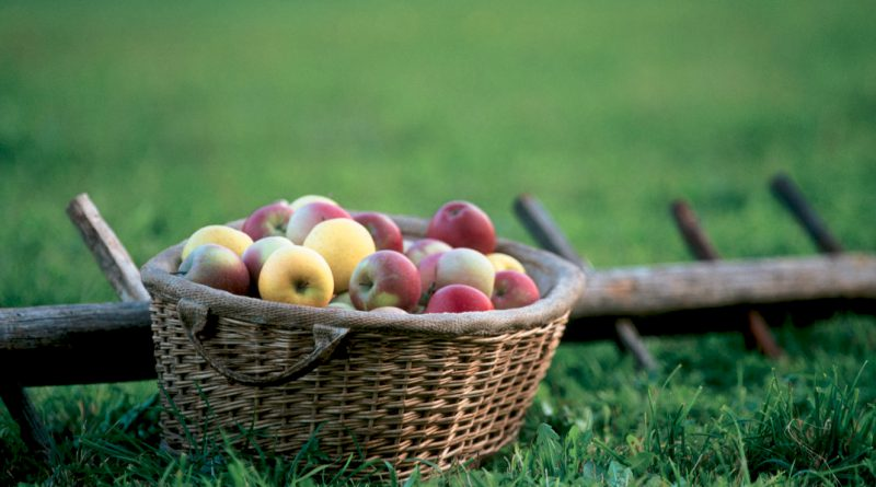 La manzana, un clásico que se renueva