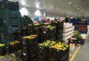 Mercavalencia reparte más de 400 kilos de mandarinas en la cabalgata de Reyes de Valencia
