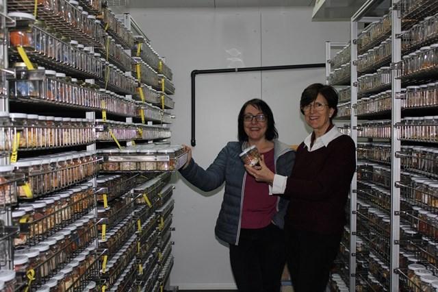 Cómo recuperar melones y sandías tradicionales adaptándolos al cultivo ecológico