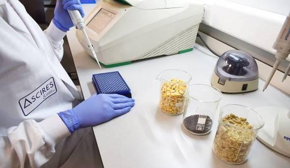 Así es el test que detecta los transgénicos en nuestros alimentos