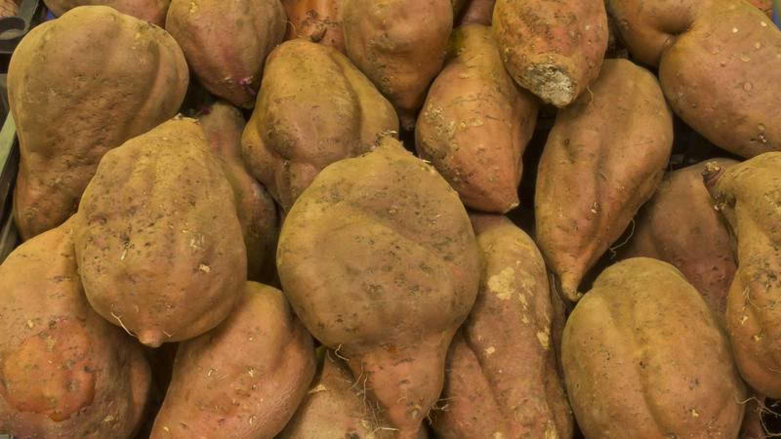 Descubren que la batata no proviene de América sino de Asia