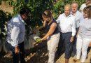 La Uva de Mesa Embolsada Vinalopó genera 30 millones de euros y más de 13.000 empleos