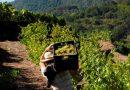 Los agricultores valencianos acusan al Gobierno de proteger al cava catalán