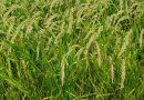 Los países productores de arroz de la UE votan a favor de establecer una clausula de salvaguardia frente a las importaciones de Camboya y Myanmar