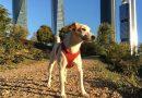 Pipper, el primer perro turista, llega a la Comunitat para promocionar viajes con mascota y lugares dog friendly