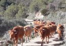 El Parque Natural del Prat de Cabanes-Torreblanca apuesta por la ganadería extensiva y ecológica