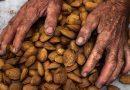 El consumo de frutos secos a largo plazo podría ser la clave para mejorar la salud cognitiva en ancianos