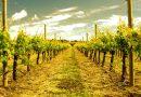 ESPADAN 31 cata de vinos