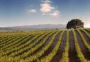 Sierra Norte, premio 'Eduardo Mestres' a la mejor bodega del año