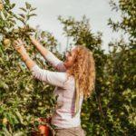 No solo el agua o el sol intervienen en los cultivos…El viento, guardián silencioso de las manzanas