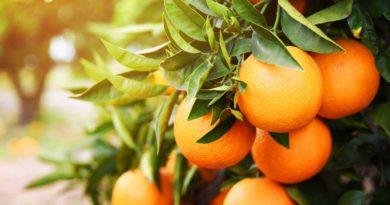 Una molécula que se encuentra en las naranjas podría reducir la obesidad y prevenir enfermedades cardíacas y diabetes