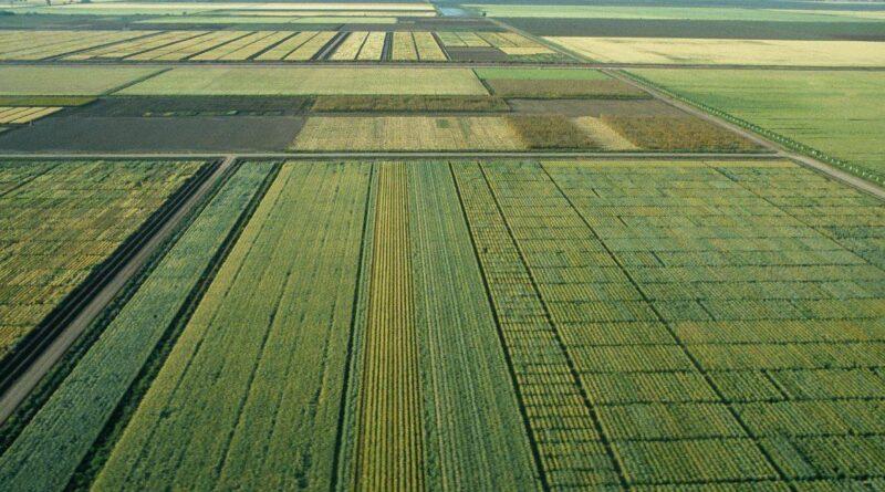 Estas son las variedades mejoradas de trigo más resistentes al calor