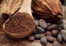El cacao natural favorece la concentración y el rendimiento mental en personas jóvenes adultas